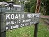 koala hospital, australia